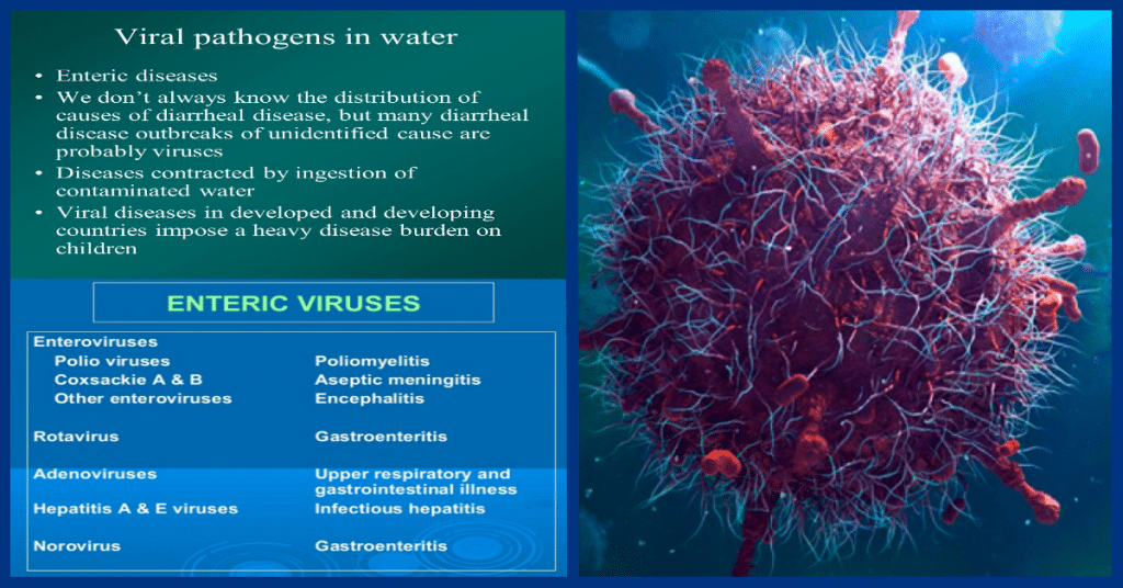 viruses in water